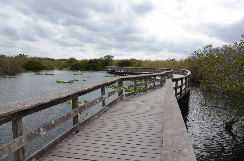 Everglades NP - Anhinga Trail Boardwalk