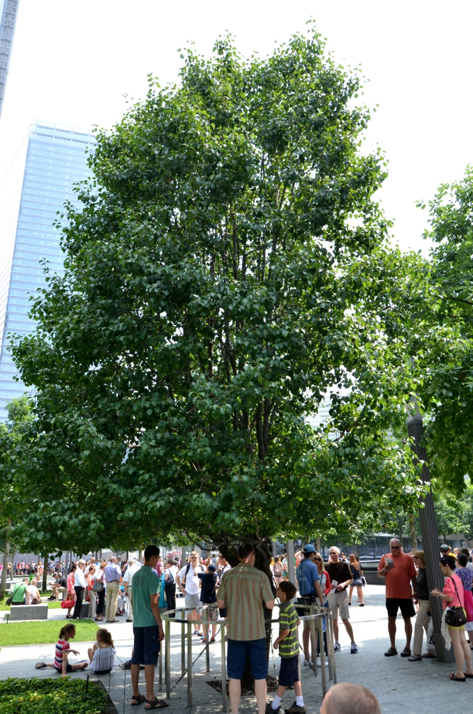 9-11 Memorial - Survivor Tree