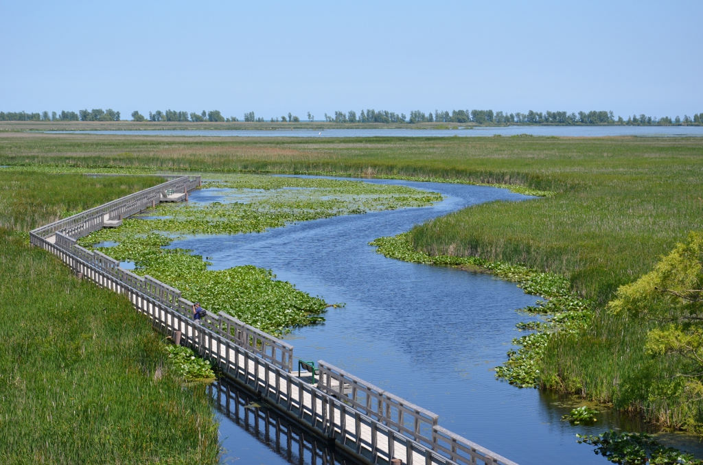 Point Pelee - Marshland View Tower