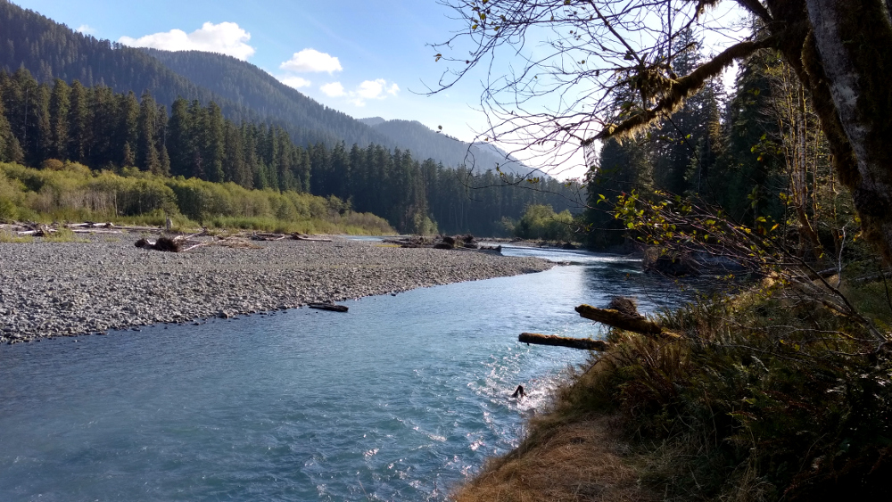 Hoh River - Olympic NP