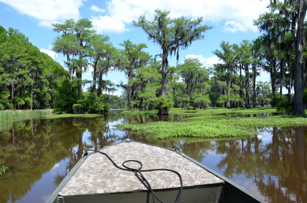 Caddo Lake - Boat Tour