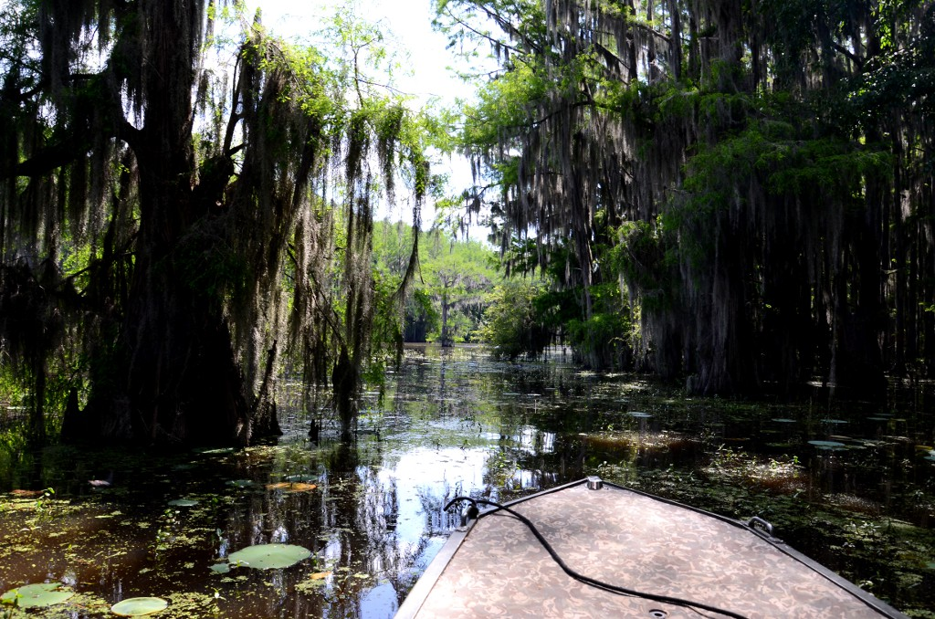 Caddo Lake - Cypress