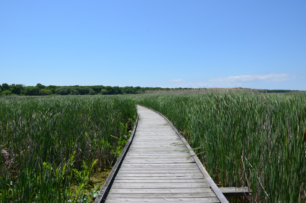 Point Pelee - Marshland Walk