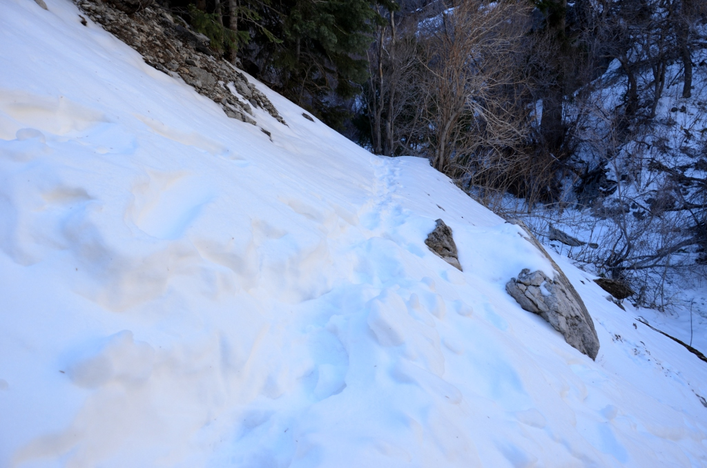 Mount Charleston - Fletcher Canyon Trail - Snow