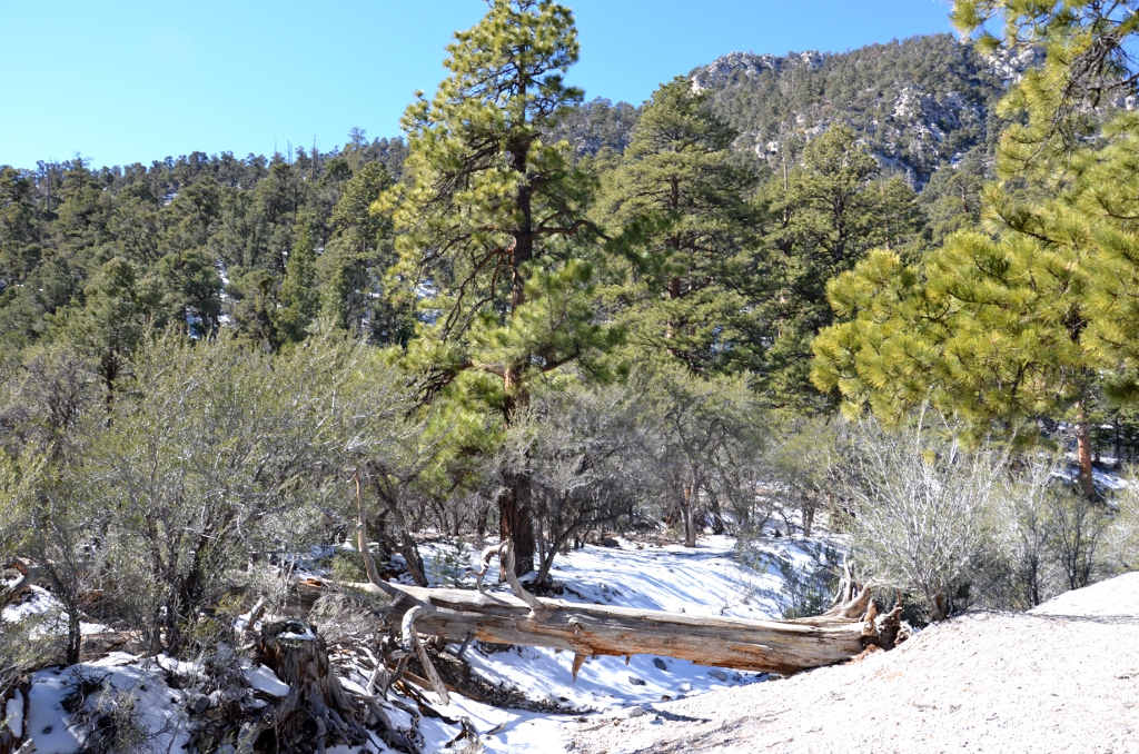Mount Charleston - Fletcher Canyon Trail