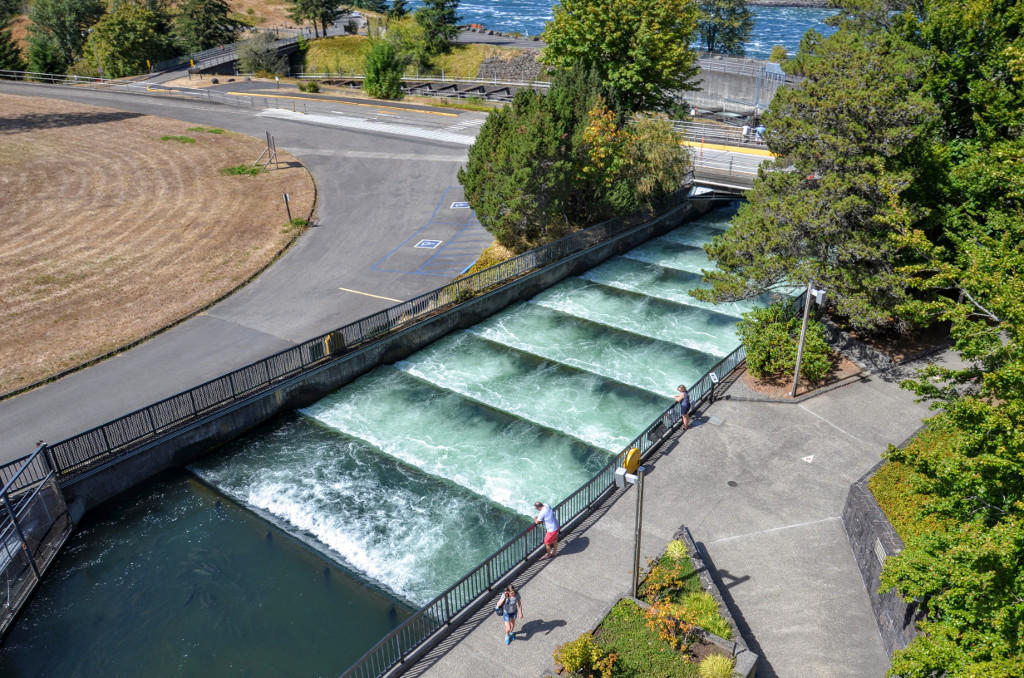 Bonneville Dam - Fish Ladder