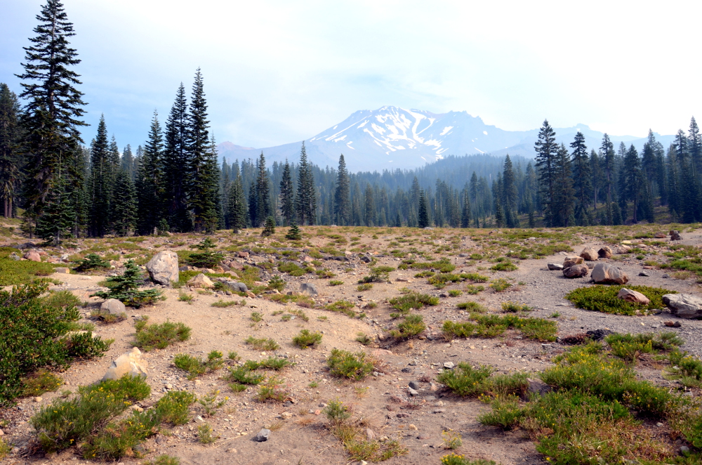 Panther Meadow - Mt Shasta
